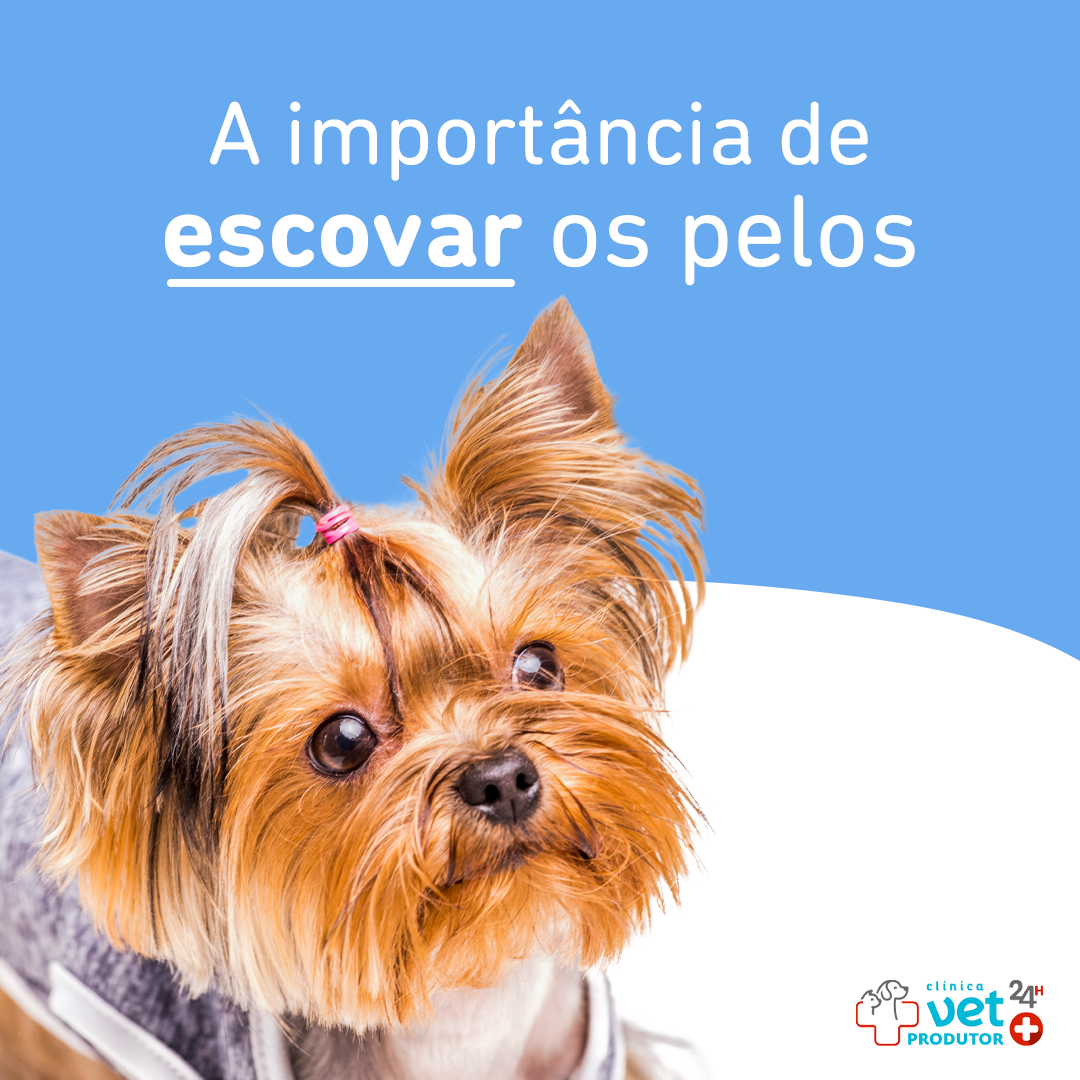 como escovar os pelos do pet